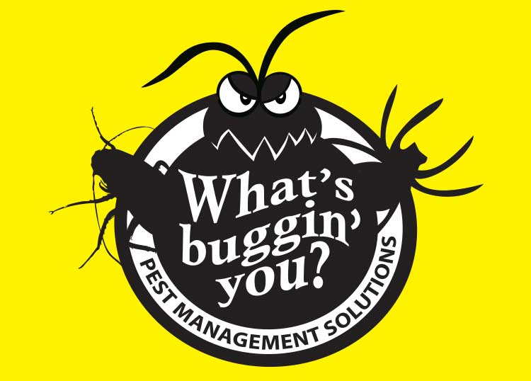 What's Buggin You