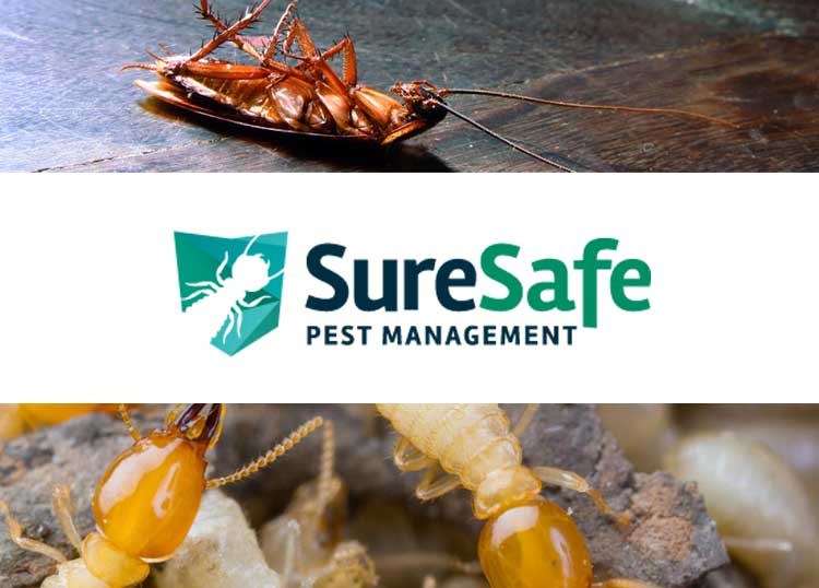 Sure Safe Pest Management Bundaberg