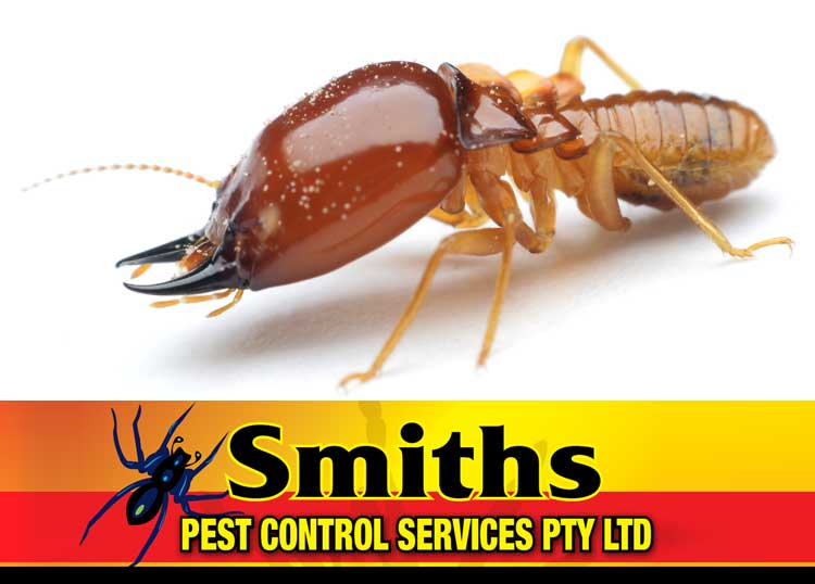 Smith's Pest Control Services