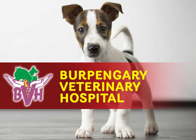 The Burpengary Veterinary Hospital