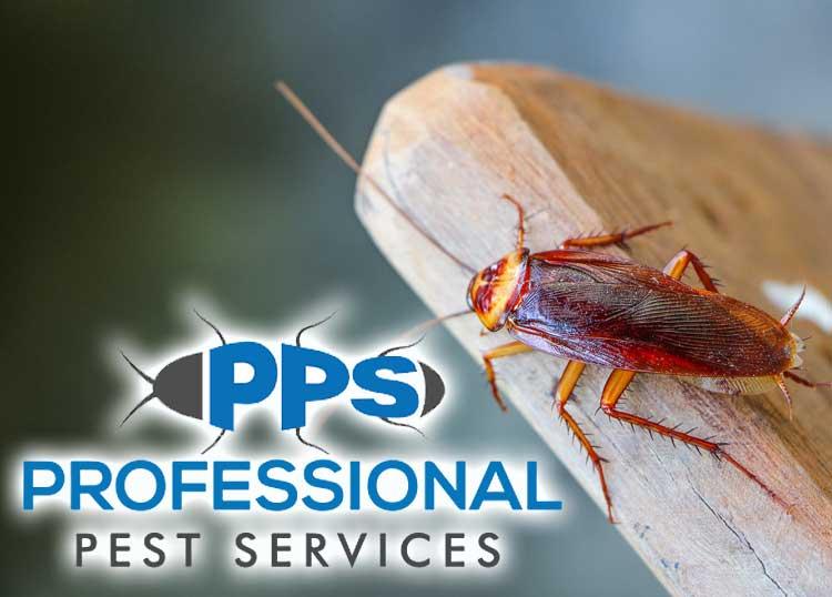 Professional Pest Services