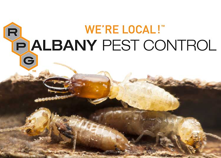 Albany Pest Control