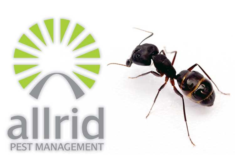 Allrid Pest Management Pilbara