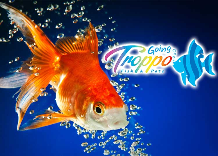 Going Troppo Fish & Pets