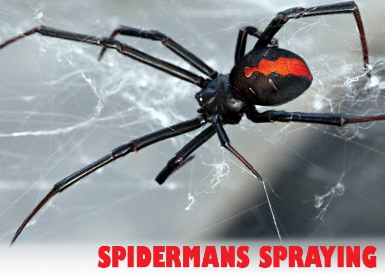 Spidermans Spraying