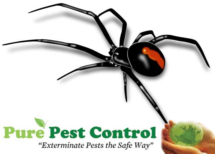 Pure Pest Control