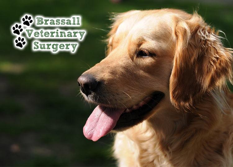 Brassall Veterinary Surgery