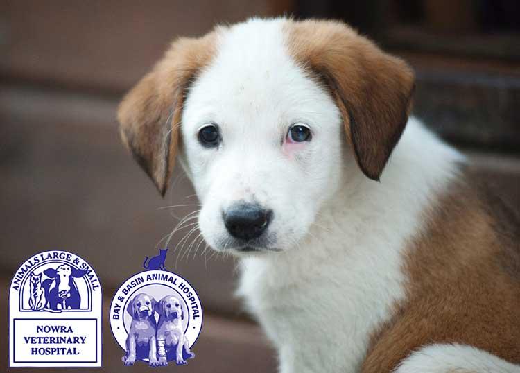 Nowra Veterinary Hospital & Bay & Basin Animal Hospital