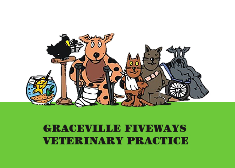 Graceville Fiveways Veterinary Practice