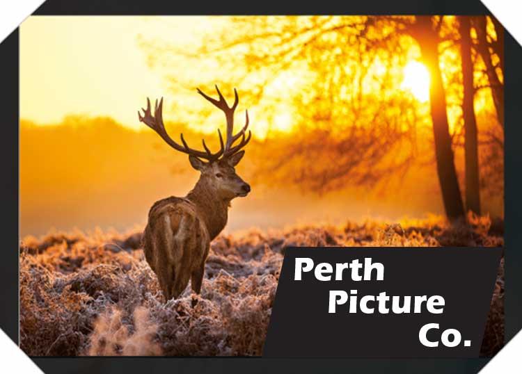 The Perth Picture Company