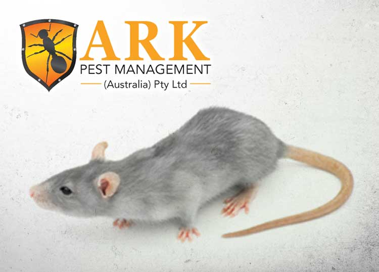 ARK Pest Management