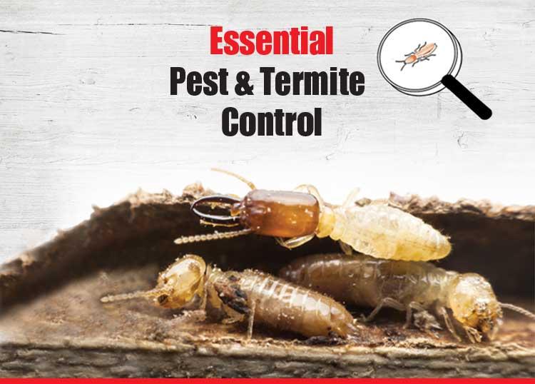 Essential Pest & Termite Control