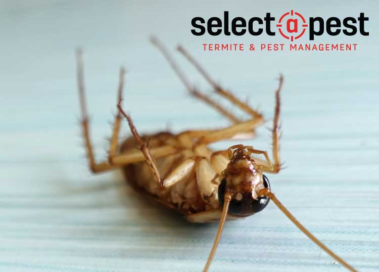 Selectapest Professional Termite