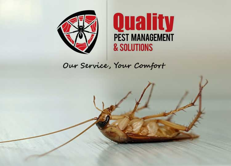 Quality Pest Management & Solutions
