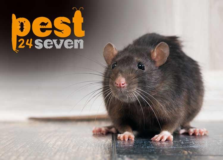 Pest 24 Seven