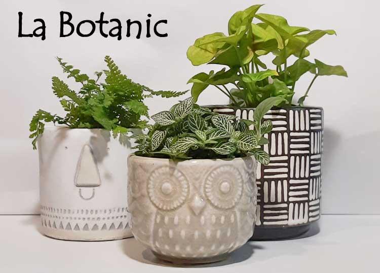 La Botanic Flowers Albany