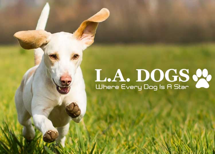 L.A Dogs