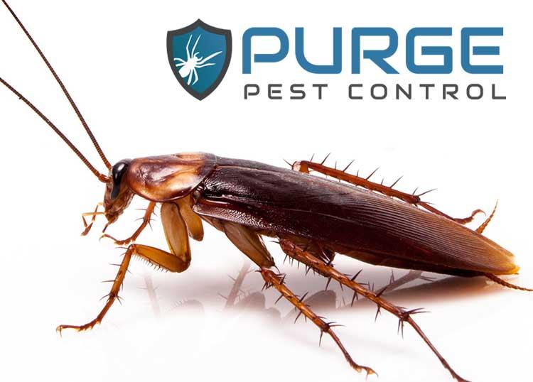 Purge Pest Control