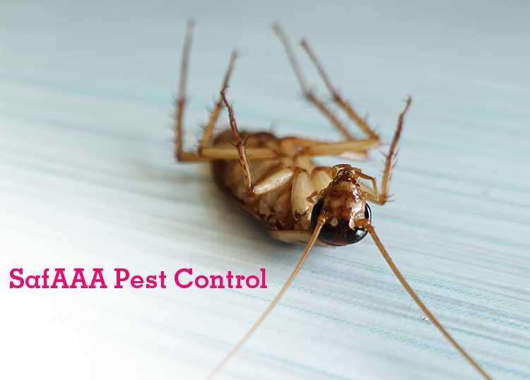 SafAAA Pest Control