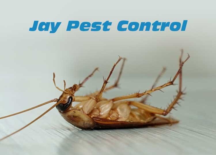 Jay Pest Control