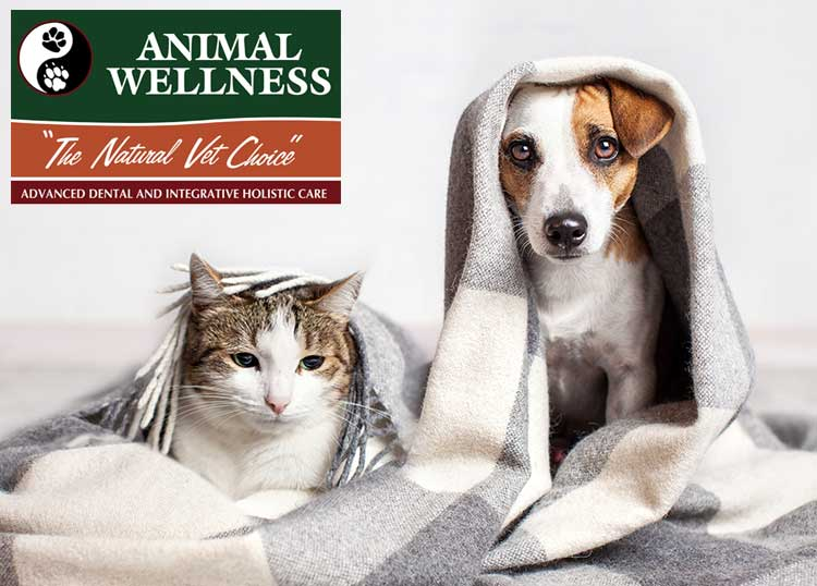 Animal Wellness -The Natural Choice
