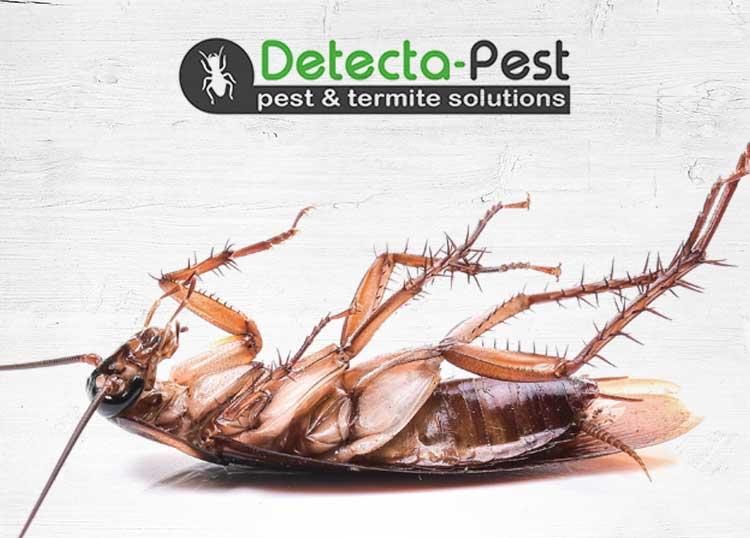 Detecta-Pest & Termite Solutions