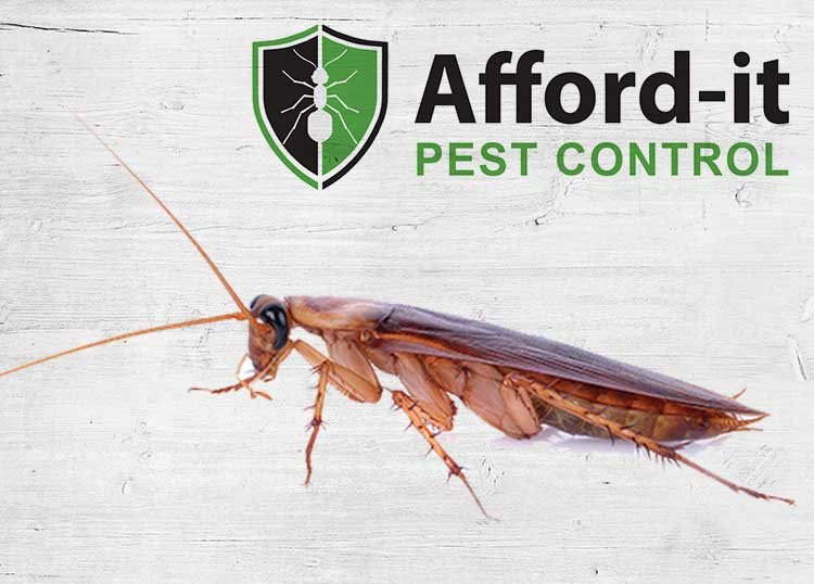 Afford It Pest Control
