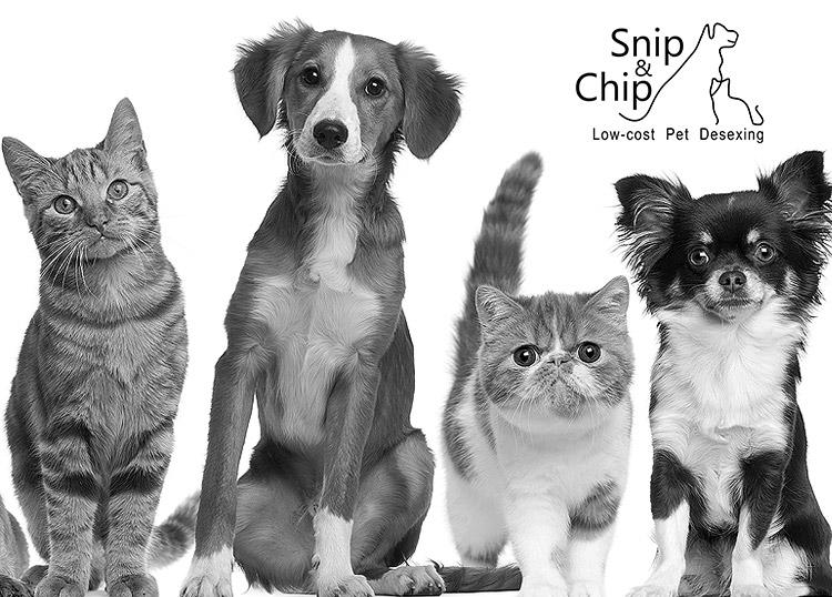 Snip & Chip