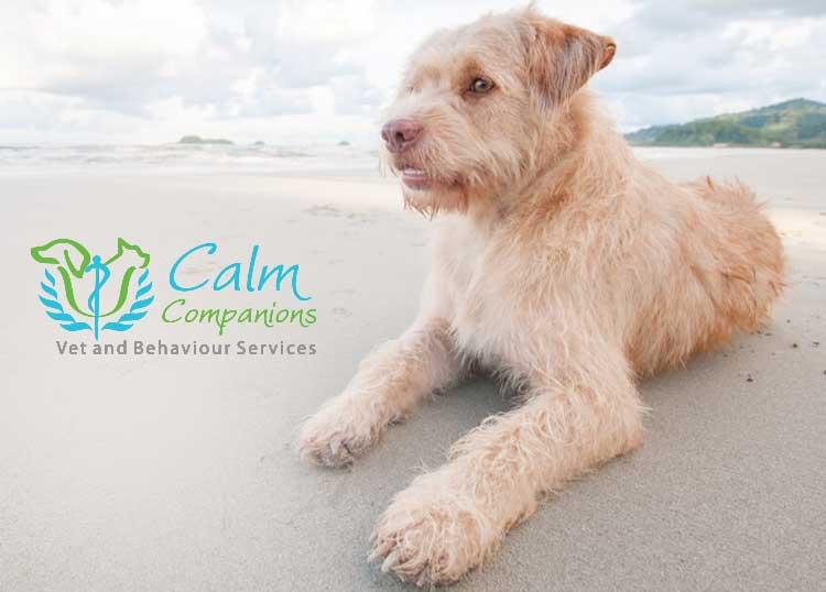 Calm Companions