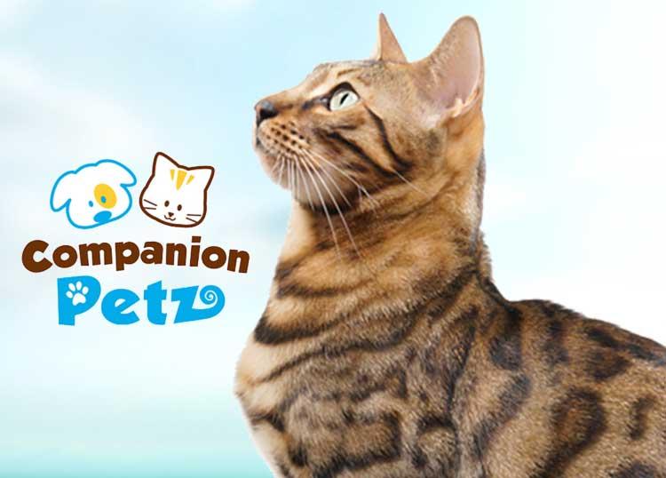 Companion Petz